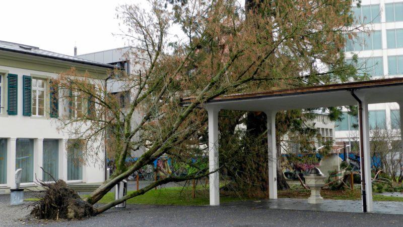 Die Stürme Burglind, Evi und Friederike sorgten auch für Schäden an Aargauer Kirchengebäuden. 17 solcher Schadenfälle verzeichnet die Aargauische Gebäudeversicherung AGV. Zum Beispiel in Aarau, wo ein Baum auf die Verbindung zwischen Kirche und Pfarrhaus fiel. | © zvg
