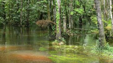 Ein Bach fließt durch den Urwald, in der Nähe von Obidos (Brasilien). | © kna-bild