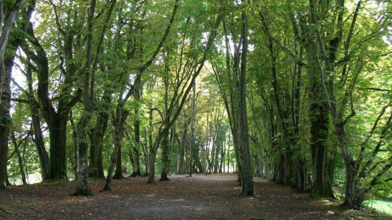 In Fahrwangen soll es bald eine letzte Ruhestätte zwischen Bäumen geben. (Symbolbild) | © www.sakrallandschaft-innerschweiz.ch