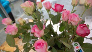 Im Anschluss an den Gottesdienst werden Rosen an Mütter in der Pfarrei verteilt. | © Fastenopfer