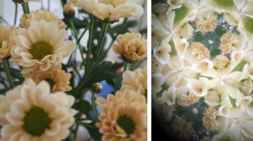 Blumen links - rechts dieselben Blumen durch ein Umgebungskaleidoskop fotografiert. | © Anne Burgmer (Fotomontage)