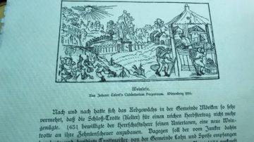 Weinbau hat im Aargau lange Tradition und geht bis auf die Römer zurück. Die Rebflächen erreichten Ende des 19. Jahrhunderts einen Höchststand. Damals bewirtschaftete der Aargau mit einer Rebfläche von rund 2700 Hektaren eine um 500 Hektaren grössere Fläche als das Wallis zur gleichen Zeit. Auszug aus einer Chronik aus dem Schloss Wildegg zum Thema Weinbau im 17. Jahrhundert. | © Marie-Christine Andres