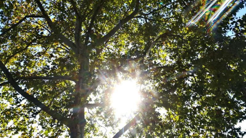 Häufige Worte, die im Kontext mit Jenseitsvorstellungen fallen, sind: Licht, Helligkeit, Wärme. Horizonte hat sich auf Spurensuche begeben. | © Anne Burgmer